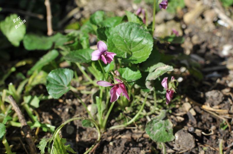 Vive le printemps nouveau le monde selon ray zab for Vive le jardin ales