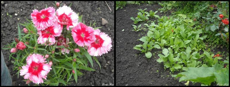 A r au jardin suite le bonheur est ph m re - Bettes au jardin ...
