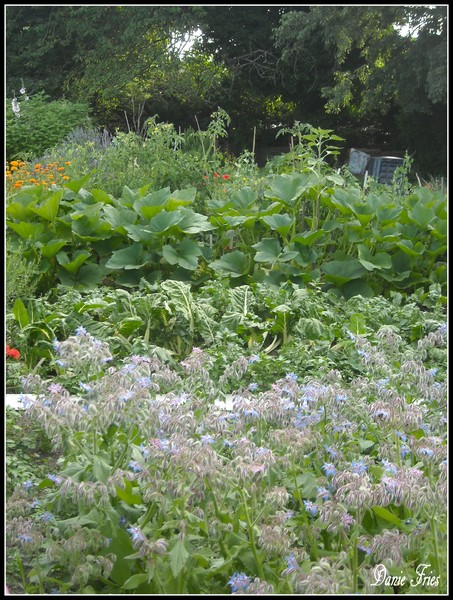 Au jardin ca pousse hum le bonheur est ph m re - Bettes au jardin ...
