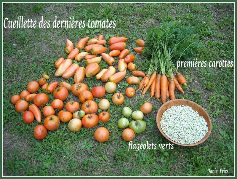 Au jardin une petite recolte le bonheur est ph m re - Congeler les haricots verts du jardin ...