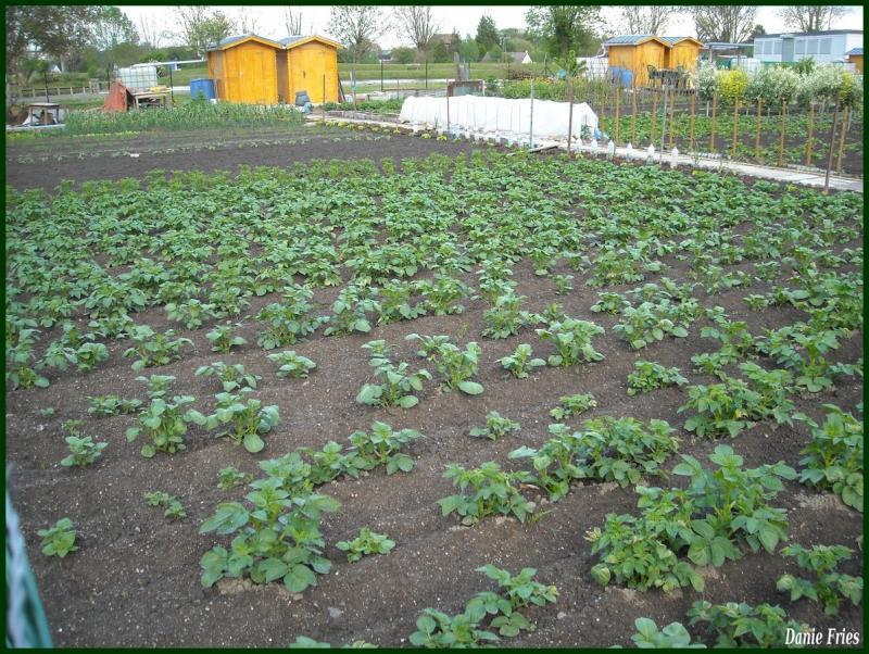 Jardin familiaux quimper les jardins familiaux ouvrent for Jardin familiaux