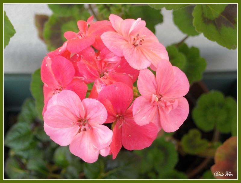 Scenery spring pictures fleurs de printemps balcon for Fleurs jardin printemps