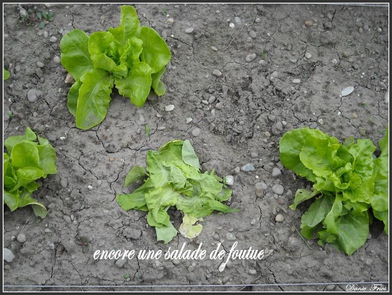 Mes pauvres salades le bonheur est ph m re for Lutter contre les vers des salades