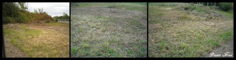 Dürr graines-Jeu de sports et de pelouse