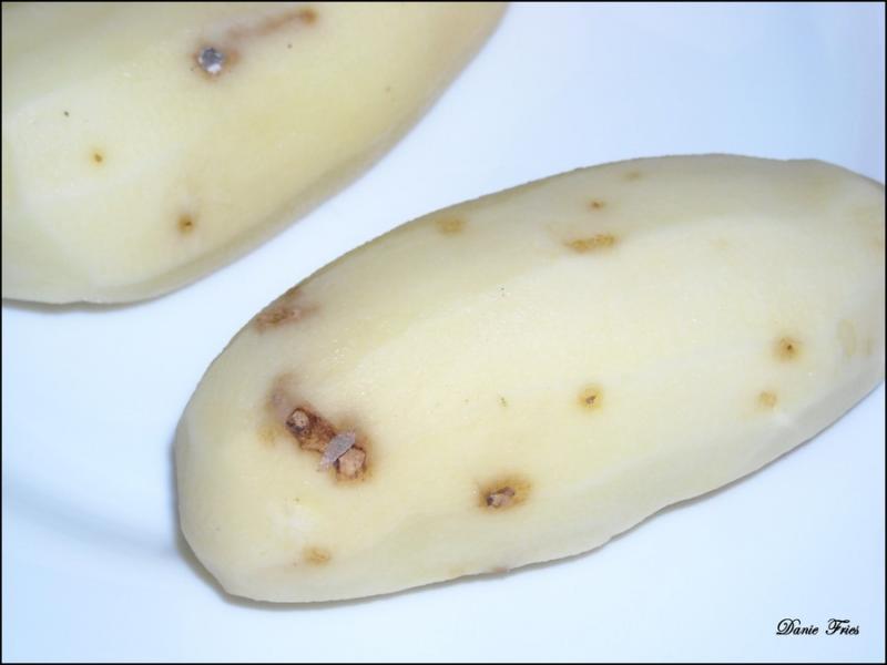 Svp sos pommes de terre qui peut me dire le bonheur est ph m re - Maladie de la pomme de terre ...