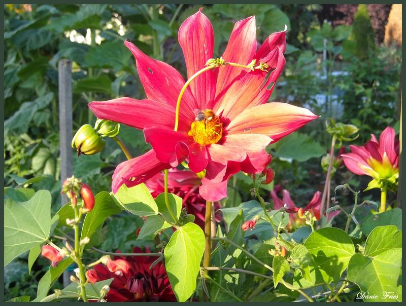 Un nouveau petit tour au jardin le bonheur est ph m re - Petit jardin culinary arts tours ...
