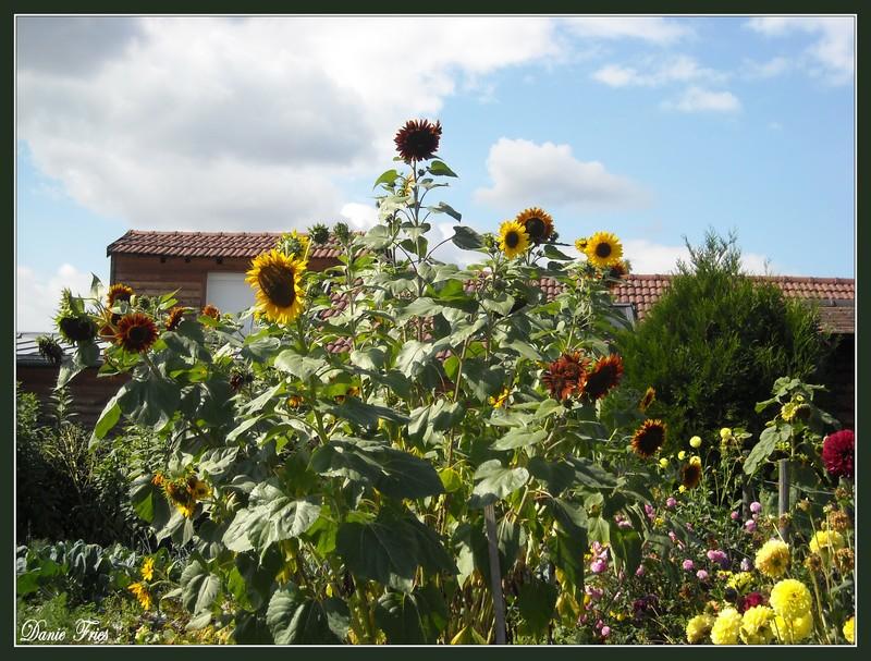 Un regard vers les fleurs du jardin le bonheur est for Vers du jardin