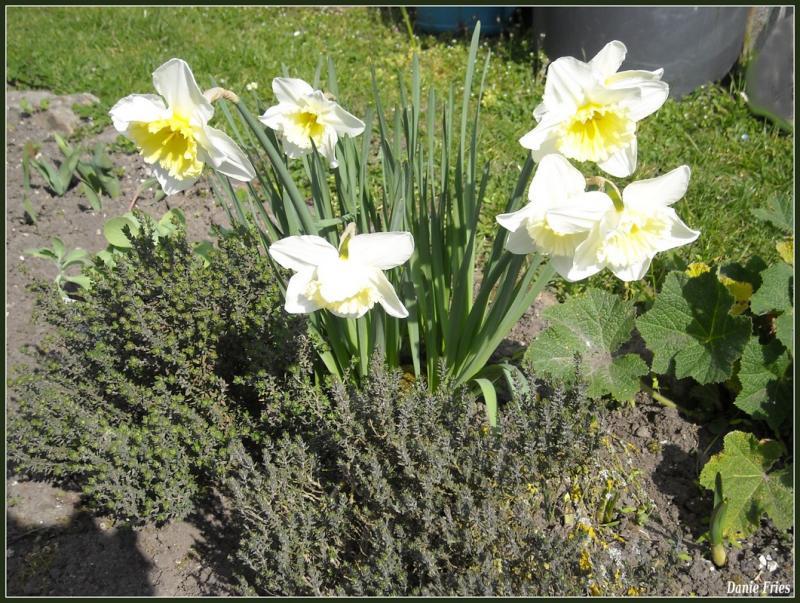 Un tout petit tour au jardin le bonheur est ph m re for Tout petit jardin