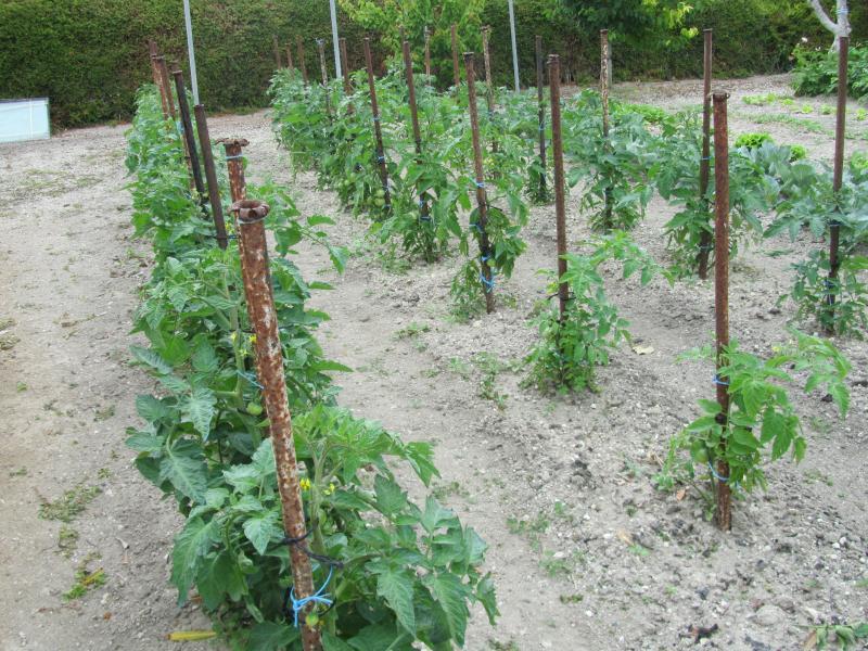 Potager maryse for Blog jardin potager