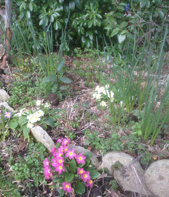 Le retour du printemps nettoyage du jardin jonquilles - Nettoyage du jardin ...