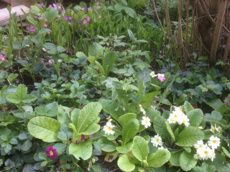 Le retour du printemps nettoyage du jardin jonquilles for Nettoyage jardin printemps