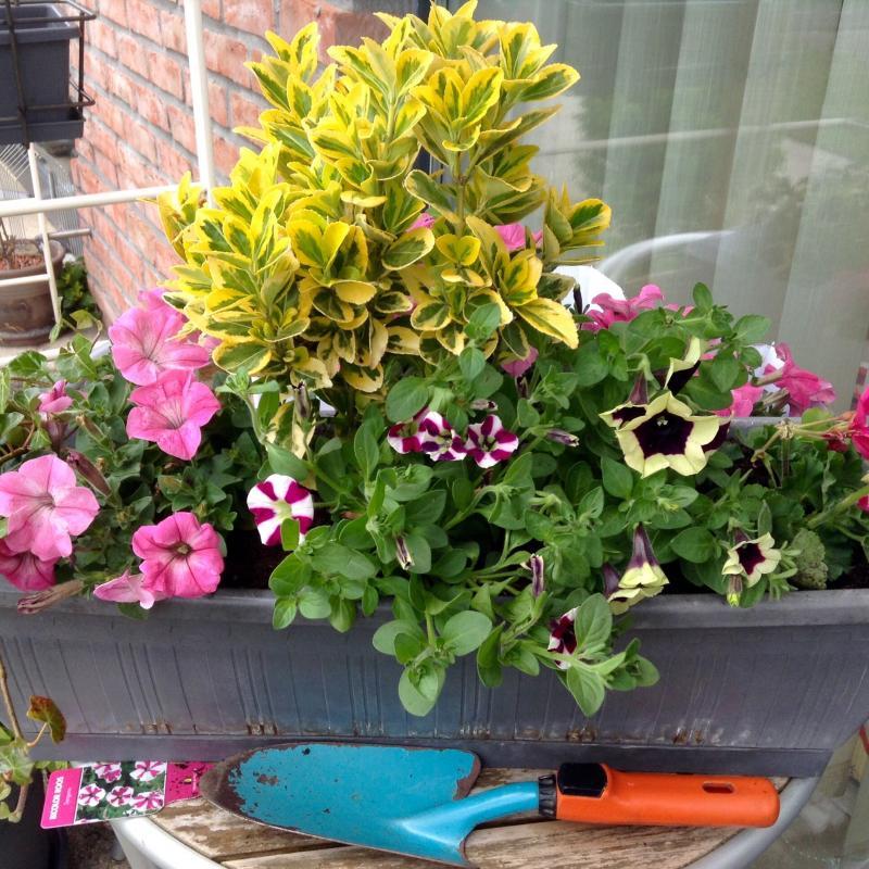 Plantation de mes fleurs gigi for Plantation de fleurs