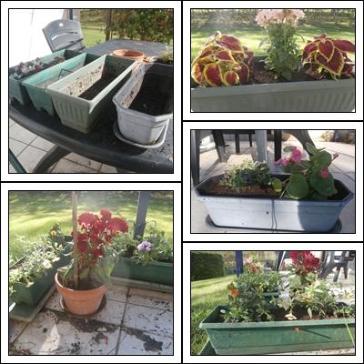 Les jardini res de l ann e 33gourmande - Fleurs en jardiniere toute l annee ...