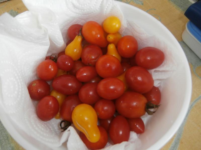 On profite toujours des largesses du jardin 33gourmande - Que faire avec des tomates du jardin ...