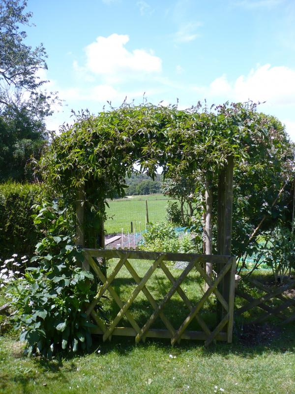 Au jardin ce matin le blog de titanique for Plante au jardin