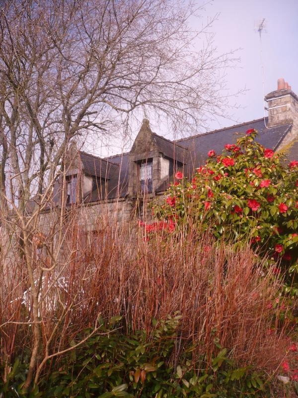 Au jardin en f vrier le blog de titanique for Jardin fevrier