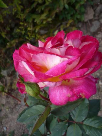 Encore quelques fleurs au jardin le blog de titanique for Jardin encore