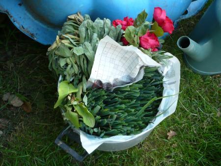 Le retour du wk avec pleins de choses le blog de titanique - Plants de poireaux a repiquer ...