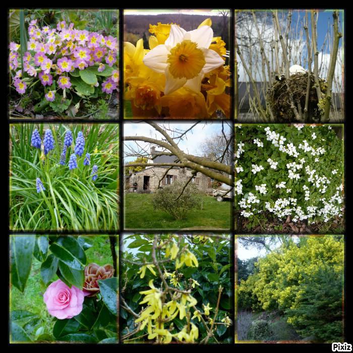Les fleurs de mars au jardin le blog de titanique for Au jardin by les amis