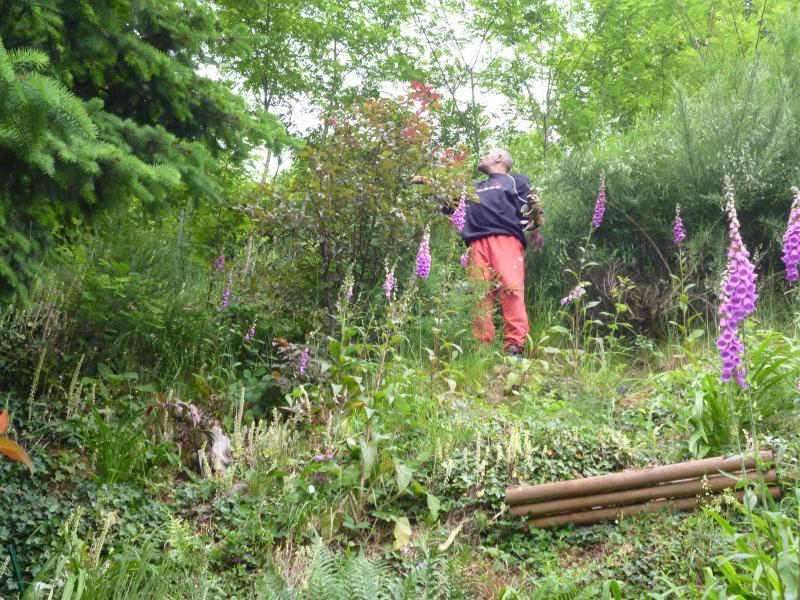 D broussaillage vend e blog for Debroussaillage jardin