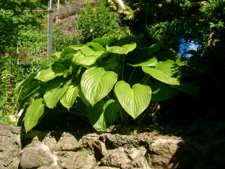 plante verte jardin identification de quelques plantes