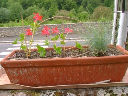 http://www.certiferme.com/imgs/contenu/jardin_photo/blog-611-on-est-vraiment-en-juin--150610193334-3700942993.JPG
