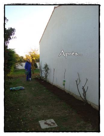 10 novembre 2010 les nouvelles plantations la guillaumette - Repiquer des framboisiers ...