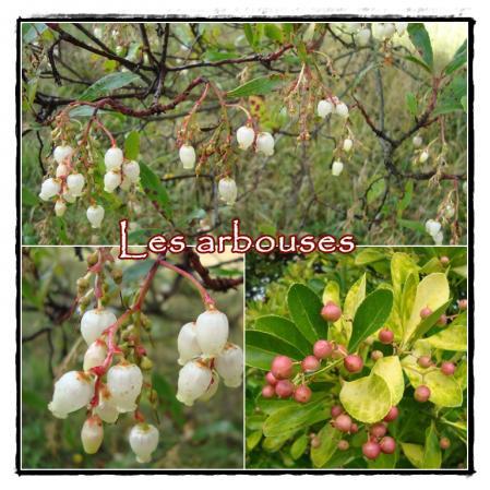 20 novembre 2010 le jardin de roger meschers la - Quand faut il couper les fleurs fanees des hortensias ...