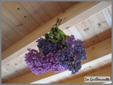 Fleur hortensia s ch e id e d 39 image de fleur - Comment faire secher des hortensias ...