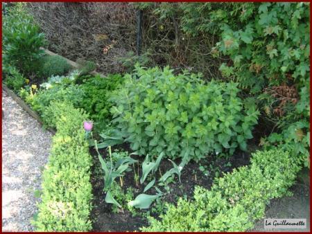 Le 17 mai 2010 il faut cultiver notre jardin la - Quand faut il tailler la vigne ...