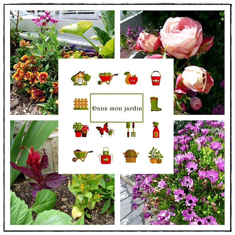 Les fleurs devant la maison 11 juin 2016 la guillaumette for Maison plante
