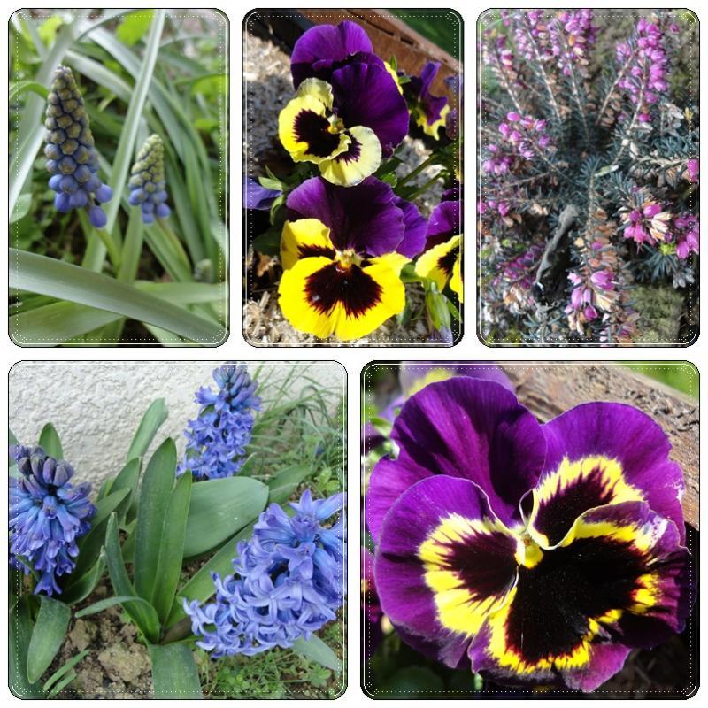 les jolies fleurs d 39 avril 2 avril 2012 la guillaumette. Black Bedroom Furniture Sets. Home Design Ideas
