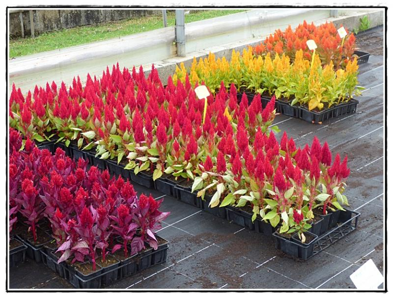 Design terrasse jardin municipal 12 vitry sur seine vitry sur seine terrasse - Terrasse jardin municipal nice ...