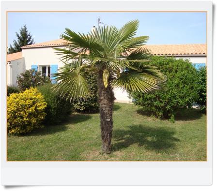 Parlons palmier 14 avril 2011 la guillaumette for La maison du palmier