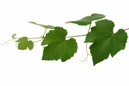 http://www.certiferme.com/imgs/contenu/jardin_photo/blog-702-quiz-feuilles-d-arbres-080809192041-4165292034.jpg