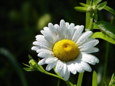 http://www.certiferme.com/imgs/contenu/jardin_photo/blog-702-quiz-les-fleurs-blanches-030909020122-2146918460.jpg
