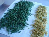 Congeler ses haricots verts tout connatre des fruits et - Congeler les haricots verts du jardin ...