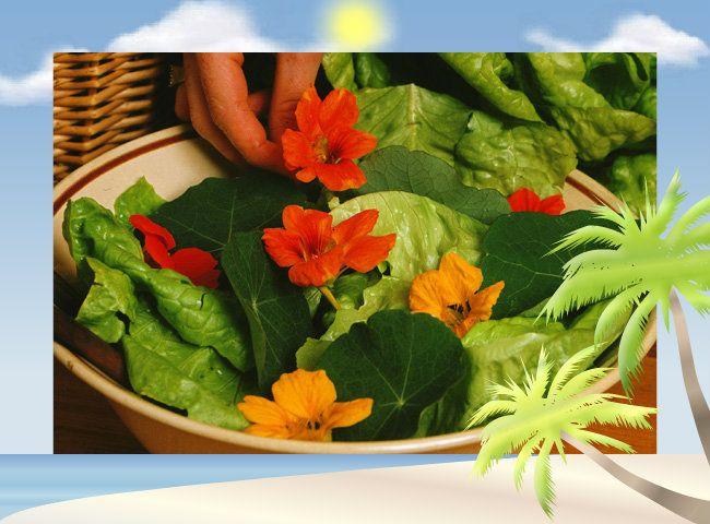mildiou tomate traitement naturel