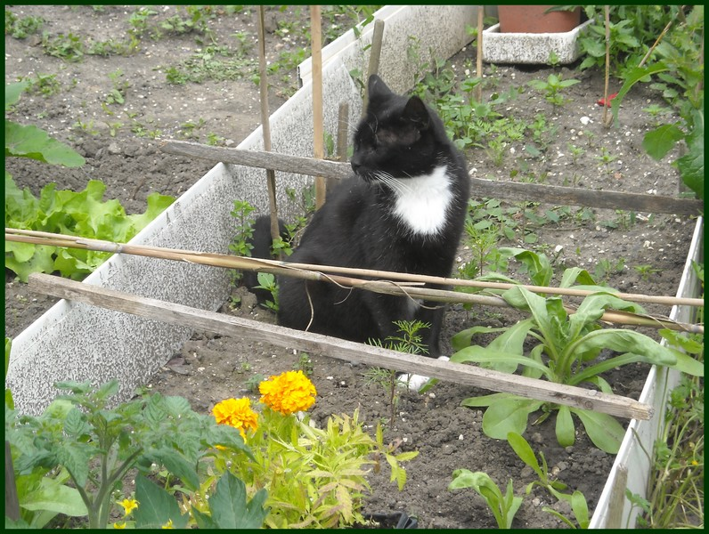 Flagrant delit les conseils d entretien du jardin et for Conseil entretien jardin