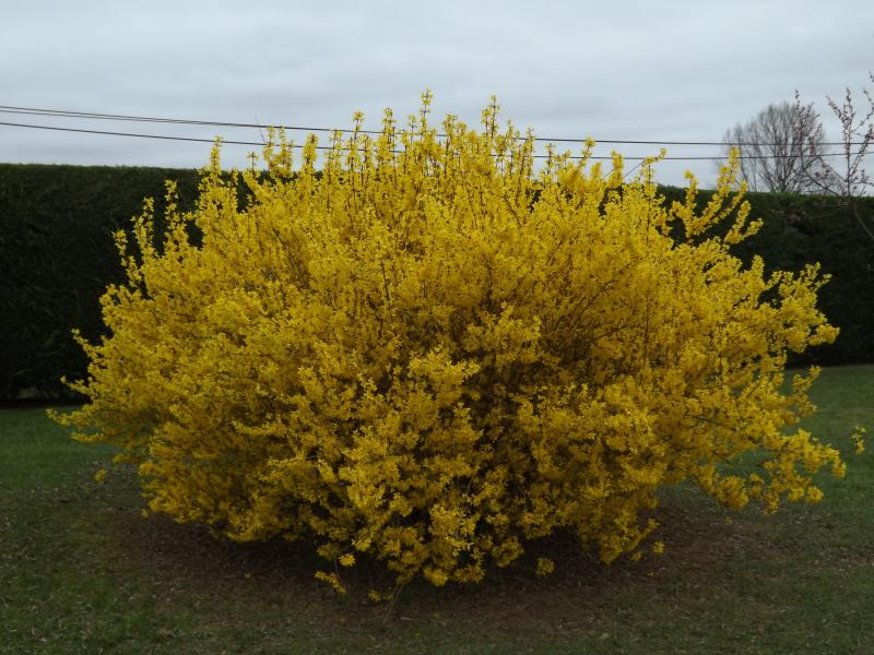 Vive le printemps les conseils dentretien du jardin et for Vive le jardin bressuire