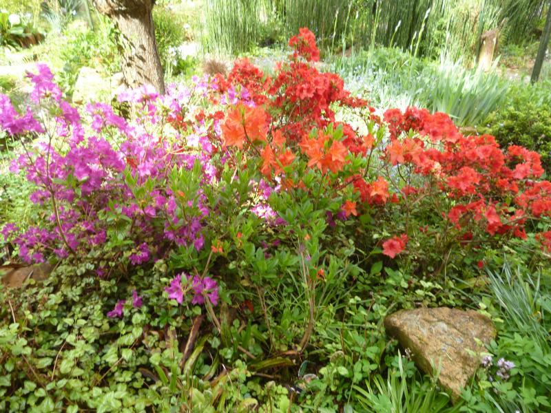 Azal es les conseils d entretien du jardin et astuces de for Conseil entretien jardin