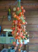 Faire scher des physalis coquerets du prou tout - Congeler les haricots verts du jardin ...