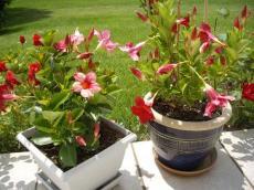 le diplad nia les fiches pratiques sur les fleurs et les arbustes avec les conseils d. Black Bedroom Furniture Sets. Home Design Ideas