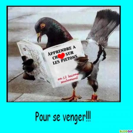 blog-3026-pigeon-aux-petits-pois-231110140350-3918382460