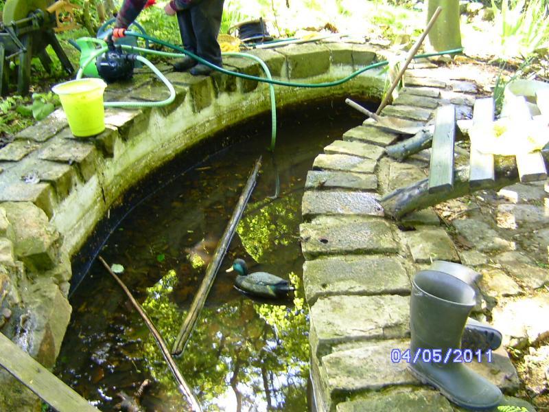 Nettoyage du bassin aux poissons lestilleuls for Nettoyage bassin poisson rouge