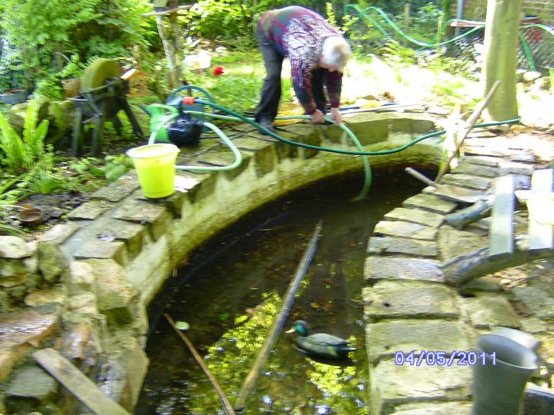 Nettoyage du bassin aux poissons lestilleuls for Nettoyage bassin poisson exterieur