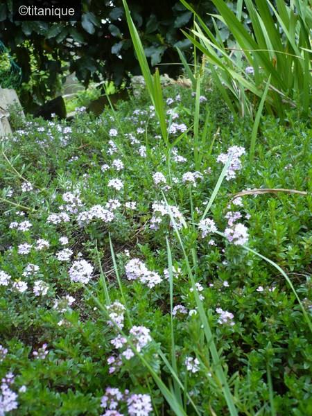 quelques herbes aromatiques de notre jardin le blog de titanique. Black Bedroom Furniture Sets. Home Design Ideas
