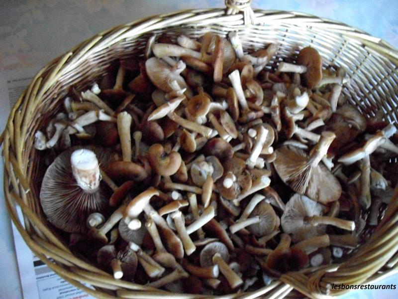 recette po l e de champignons recette po l e de champignons accompagnement avec photo. Black Bedroom Furniture Sets. Home Design Ideas