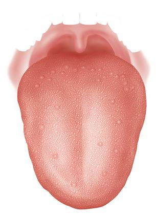 Ma langue oui sucr sal acide et amer ok chez marie loup - Pamplemousse amer ou acide ...